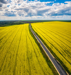Aerial view of yellow canola field. Blossoming rapeseed field with strips of bright yellow rape and a road through it.
