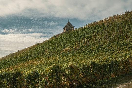 Vignes et vignobles du Bugey. Le vignoble de Montalieu