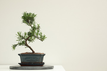Deurstickers Zen Japanese bonsai plant on white background, space for text. Creating zen atmosphere at home