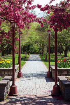 pathway at a public arboretum in orange county NY during spring of 2020