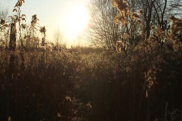 Sucha trawa w Słońcu - fototapety na wymiar