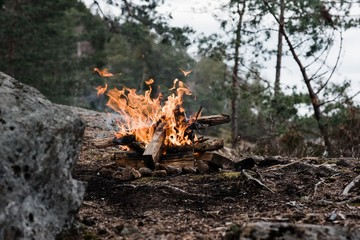 wild campfire in a national park in Sweden