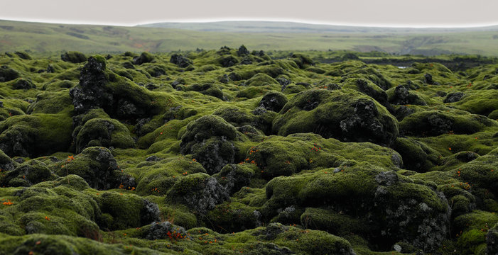 moss covered rocks on the Laka lava field in south Iceland