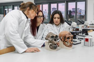 Scientists examining skull in lab Wall mural