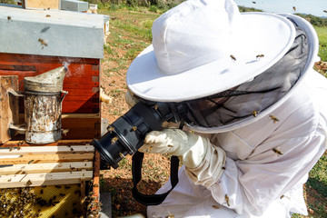 From above side view of unrecognizable beekeeper in protective costume and gloves taking picture with photo camera of beehive in apiary
