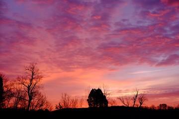Foto auf Gartenposter Koralle Silhouette Trees On Landscape Against Orange Sky