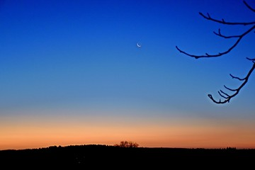 Foto auf AluDibond Dunkelblau Silhouette Of Bare Tree On Landscape At Sunset