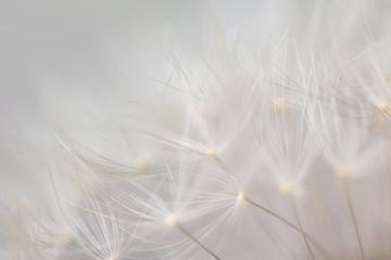 Papiers peints Montagne Closeup view of beautiful dandelion