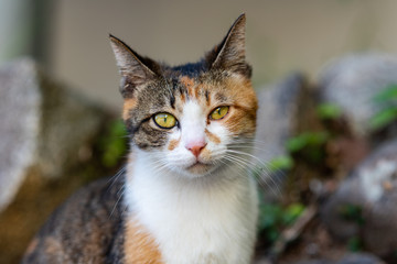 portrait of a feral cat