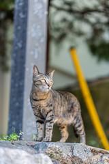 feral cat portrait taken near Karatsu castle in Karatsu, Japan