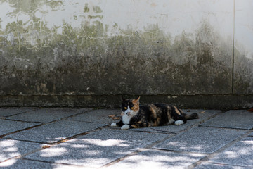 feral cat lying on the ground in the street