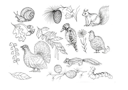 Forest animals and birds sketch doodle hand-drawn squirrel birds snail plants bumps paint