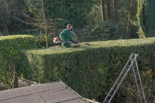 Hedge cuts - leisure - gardening