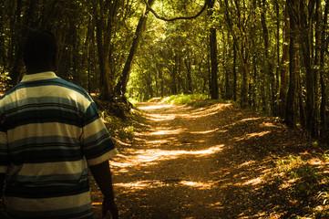 Keuken foto achterwand Weg in bos Rear View Of Man Walking On Pathway Amidst Trees In Forest