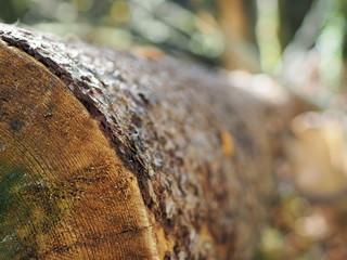 Foto auf AluDibond Brennholz-textur Tronc d'arbre