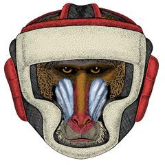 Baboon, monkey, ape. Head, portrait of animal. Boxing helmet.