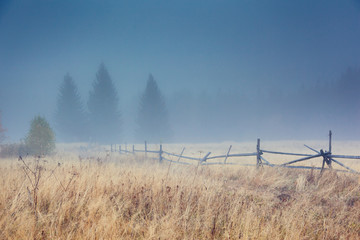 壁紙(ウォールミューラル) - Beautiful moody landscape of the foggy field. Location place Carpathian mountains, Ukraine, Europe.