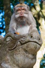 Makaken-Affe im Sacred monkey forest in Ubud auf Bali, Indonesien