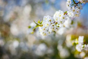 壁紙(ウォールミューラル) - Spectacular ornamental garden with blooming lush trees on a idyllic sunny day.