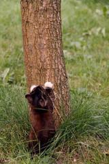 Fototapeta Mały kotek, nauka wspinania na drzewo obraz