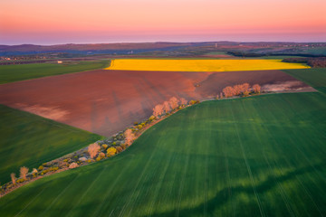Aerial view of beautiful countryside with green and yellow spring fields. Blossoming rapeseed field with strips of bright yellow rape and and wheat in golden hour before sunset.