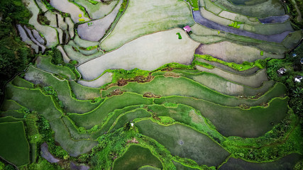 Papiers peints Les champs de riz Aerial view of terraced rice fields half-filled with water, half started to grow, in Batad, Luzon, Philippines