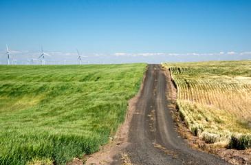 Waving Fields of Wheat and Windmills in Oregon, Taken in Summer