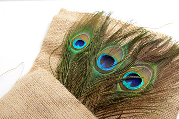 Picture of peacock's (male peafowl) feather that have an unique eyes shape pattern  Fototapete
