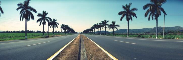Fotomurales - Empty Roads Along Palm Trees