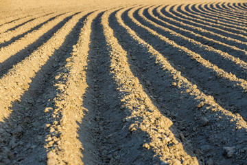 Furrows row pattern in a plowed field prepared for planting crops in spring