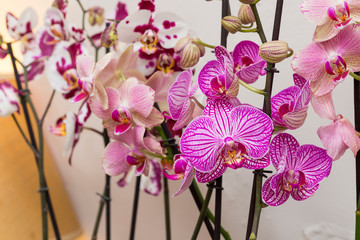 Acrylic Prints Orchid Orchidee