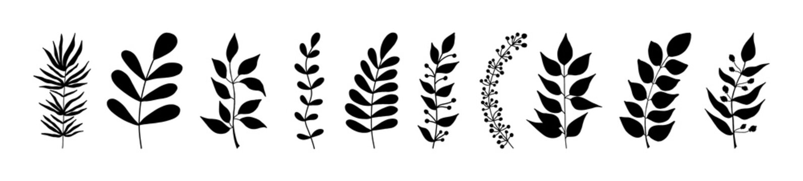 Set of black silhouettes of tropical leaves on an isolated white background. Botanical tree branches, palm leaf on the stem. Spring summer leaf. Concept design logo icons. Vector illustration.