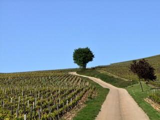 Petite route au milieu des vignes en Bourgogne.