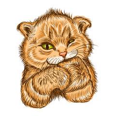 Foto op Canvas Hand getrokken schets van dieren Сute kitten sucks paw. Wall stickers