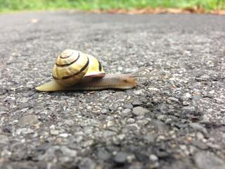 Fotomurales - Grove Snail Crossing Footpath