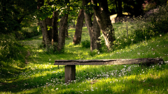 bench in the park with white daisy flowers , Ironbridge, England, Europe