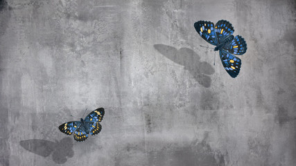 Foto auf AluDibond Schmetterlinge im Grunge Beautiful blue and yellow butterflies at concrete wall background. Free space for text.