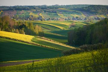 Wiejski krajobraz z polami zbóż i rzepaku