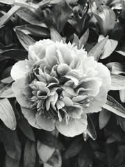 Fotobehang Close-up Of Flowers