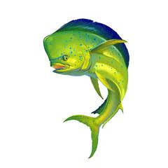 Papiers peints Pierre, Sable Mahi mahi or dolphin fish on white. Realistic illustration of mahi-mahi or dolphin fish on white background isolate.
