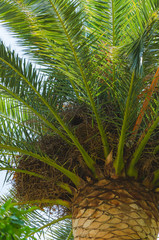 Palm leaves background, sky view