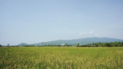 Fotobehang Rijstvelden Scenic View Of Green Landscape Against Sky