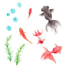 金魚5種と水草のセット。水彩イラストのトレースベクター