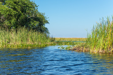 View of Everglades swamp in Florida, USA