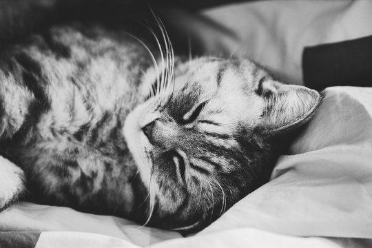 So süss kann eine Katze schlafen