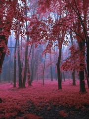 Poster Crimson Magical autumn in the foggy park