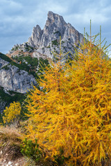 Colorful autumn alpine Dolomites rocky  mountain scene, Sudtirol, Italy. Peaceful view from Falzarego Pass. Picturesque traveling, seasonal, nature and countryside beauty concept scene.