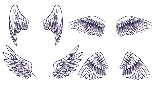 Sketch angel wings. Hand drawn different wings with feathers. Black bird wing silhouette for logo, tattoo or brand, vintage vector set