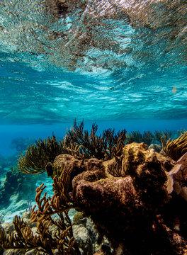 Coral Reef near Stingray City, Grand Cayman, Cayman Islands