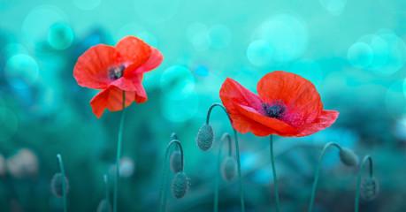 Foto auf AluDibond Reef grun Poppy flowers isolated on green blur background.